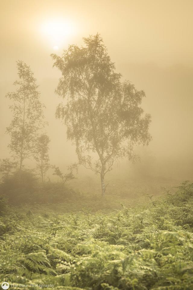 Blawith Common mists