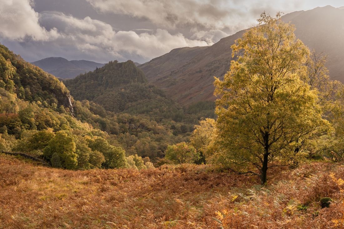 castle crag tree print